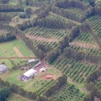 Moana Loa Macadamia Nut Farm