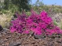 Beautiful Flowering Bushes everywhere