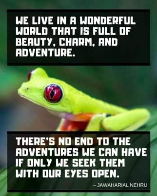 nehru-inspirational-travel-quote-480x600